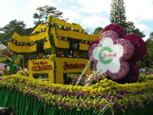 estival hoa da lat 2013 - 3