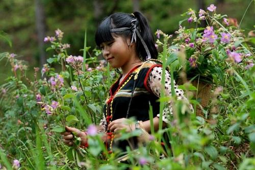 Hoa Pơ Ra Nhằng đẹp rạng rỡ e ấp như như cô thôn nữ mới lớn.