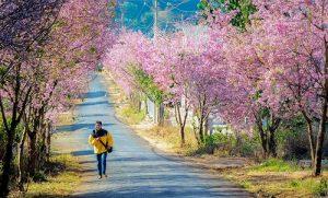 Từ khách sạn Thu Hà, bạn có thể di chuyển đến mọi điểm đến du lịch của Đà Lạt dễ dàng và nhanh chóng.