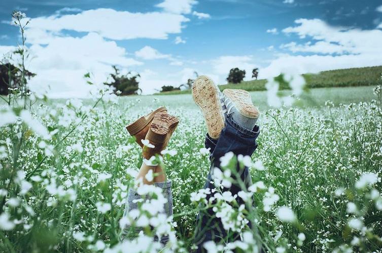 """Đà Lạt """"cởi lớp áo"""" màu vàng rực của hoa dã quỳ và khoác lên mình tấm áo màu trắng của những cánh đồng hoa cải."""