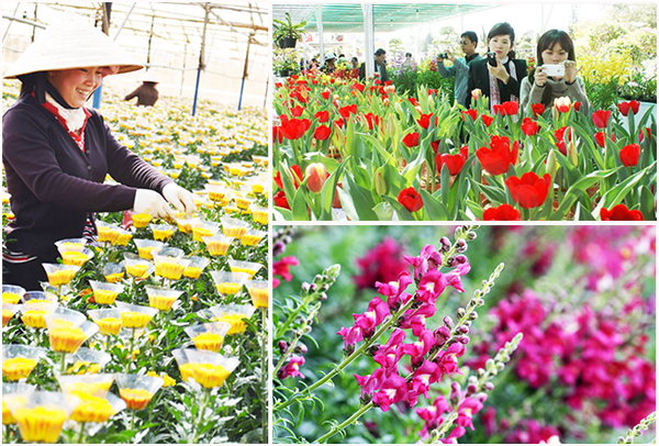 lang hoa da lat