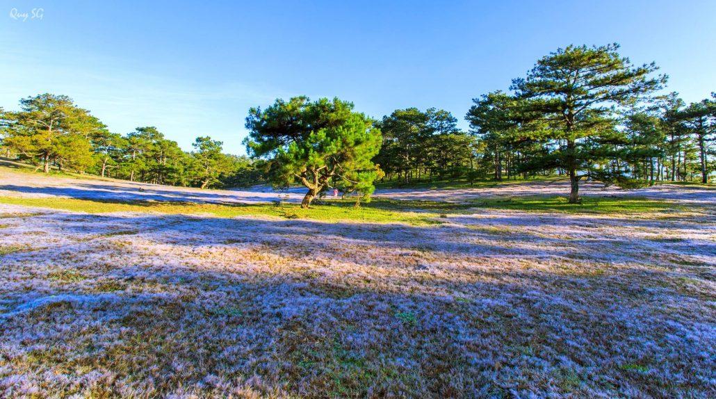 Mùa lạnh Đà Lạt bạn sẽ được ngắm đồng hoa cỏ tuyết.