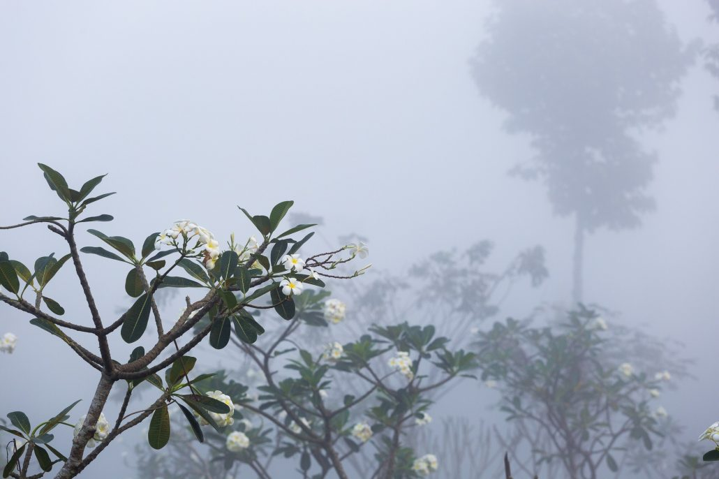 Thời tiết Đà Lạt tháng 8 cũng rất lãng mạn sương mù.