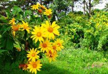 Thời tiết tháng 5 Đà Lạt rất thuận lợi để thưởng thức các vườn hoa rực rỡ.