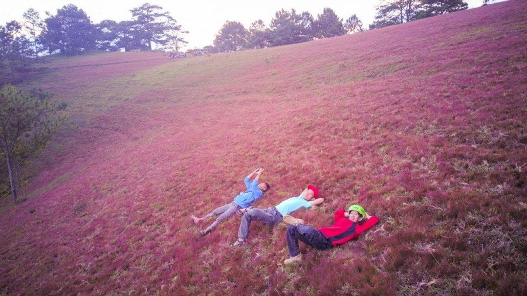 Đồi cỏ hồng mang vẻ đẹp lãng mạn, sang trọng, quyến rũ.