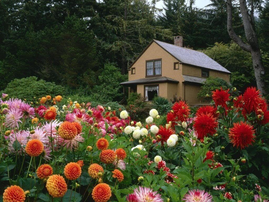 Đà Lạt tháng 7 ngập trong sắc hoa rực rỡ.