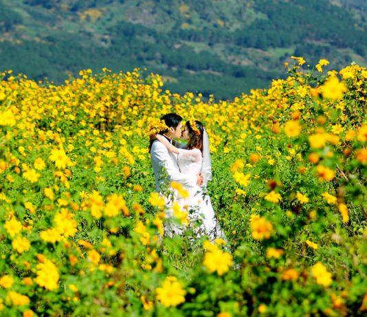 Rực rỡ hoa dã quỳ nở tại Đà Lạt.