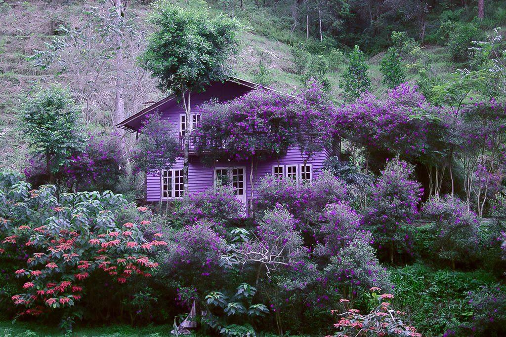 Bạn có thể nghỉ tại những căn nhà nhỏ xinh đẹp tại Ma rừng lữ quán