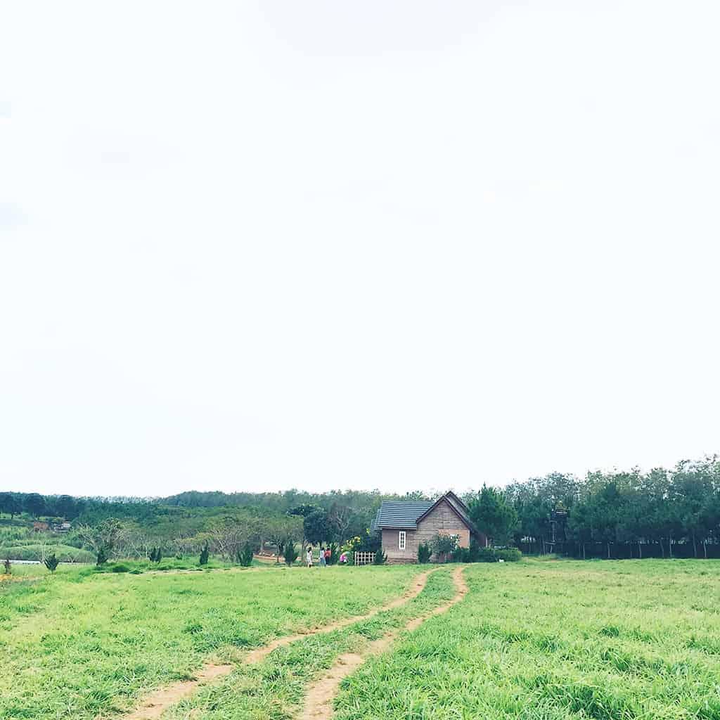 Đà Lạt Milk Farm là điểm đến được giới trẻ săn lùng.
