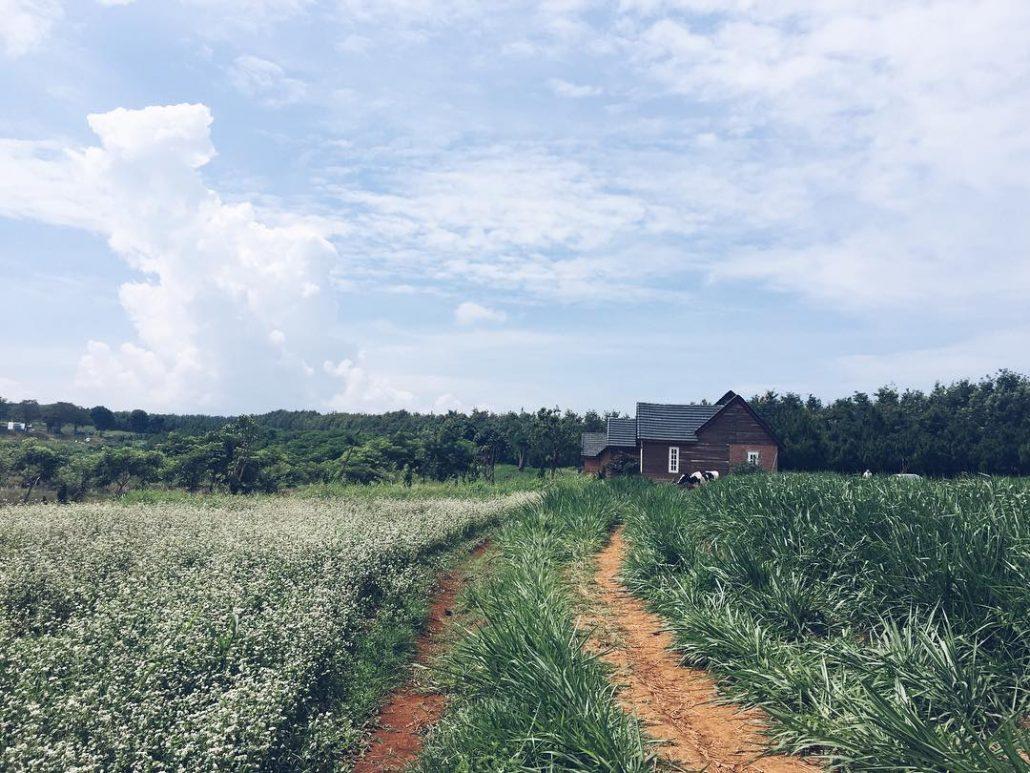 Đà Lạt Milk Farm mang vẻ đẹp yên bình, dễ chịu đến lạ.