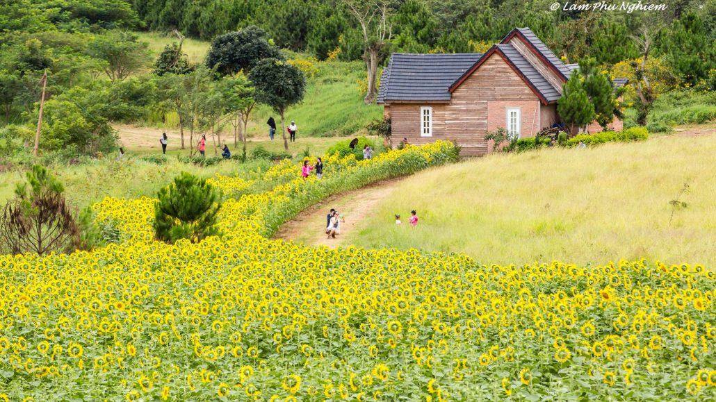 Đà Lạt Milk Farm chào đón du khách với đường hoa rực rỡ.