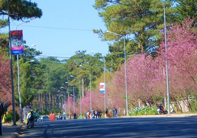 Nên tham quan Đà Lạt bằng xe máy.