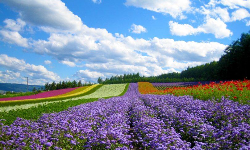 Rực rỡ sắc hoa tại làng hoa Vạn Thành.