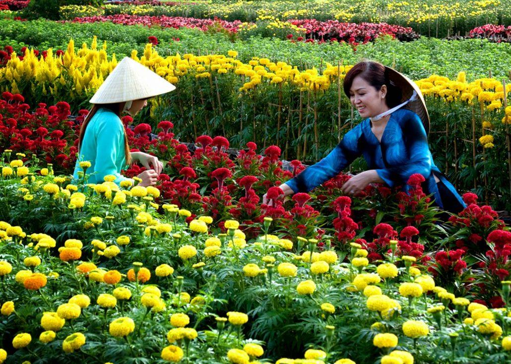 Làng Hoa Vạn Thành rực rỡ đủ sắc hoa.