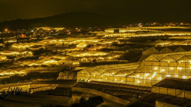 Vẻ đẹp làng hoa Vạn Thành về đêm.