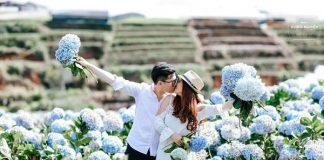 Vẻ đẹp của hoa cẩm tú cầu thu hút rất nhiều du khách