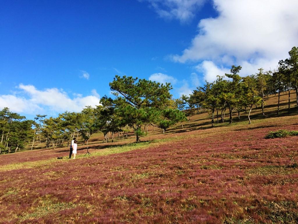 Thiên đường hoa cỏ hồng Đà Lạt.