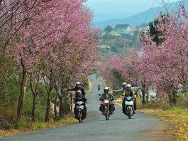 di chuyển từ Đà Lạt đến Nha Trang bằng xe máy là sự lựa chọn hoàn hảo