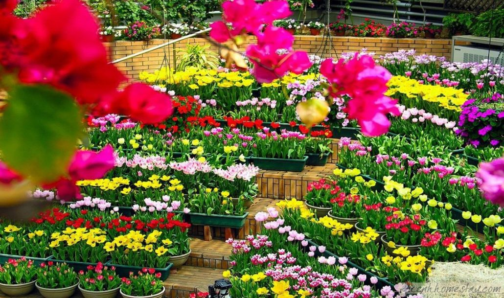 Lễ hội hoa Đà Lạt đầu năm.
