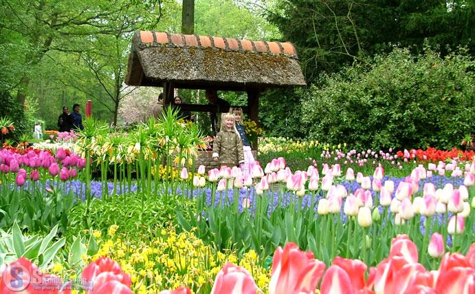 Tận hưởng sắc nắng, sắc hoa tại vườn hoa Tà Nung