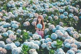 Du khách tham quan chụp hình ở cánh đồng hoa Cẩm Tú Cầu Đà Lạt