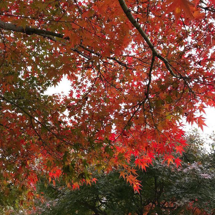 Chỉ cần đến Đà Lạt tháng 10 là bạn có thể chiêm ngưỡng vẻ đẹp của những cánh đồng hoa tam giác mạch