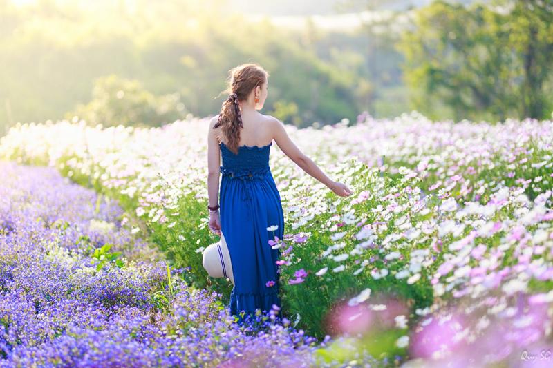 Check in trên cánh đồng hoa cánh bướm